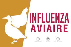 """Résultat de recherche d'images pour """"influenza aviaire"""""""